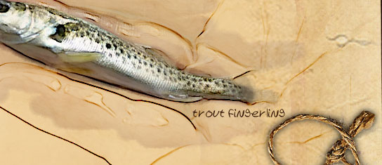 trout fingerling
